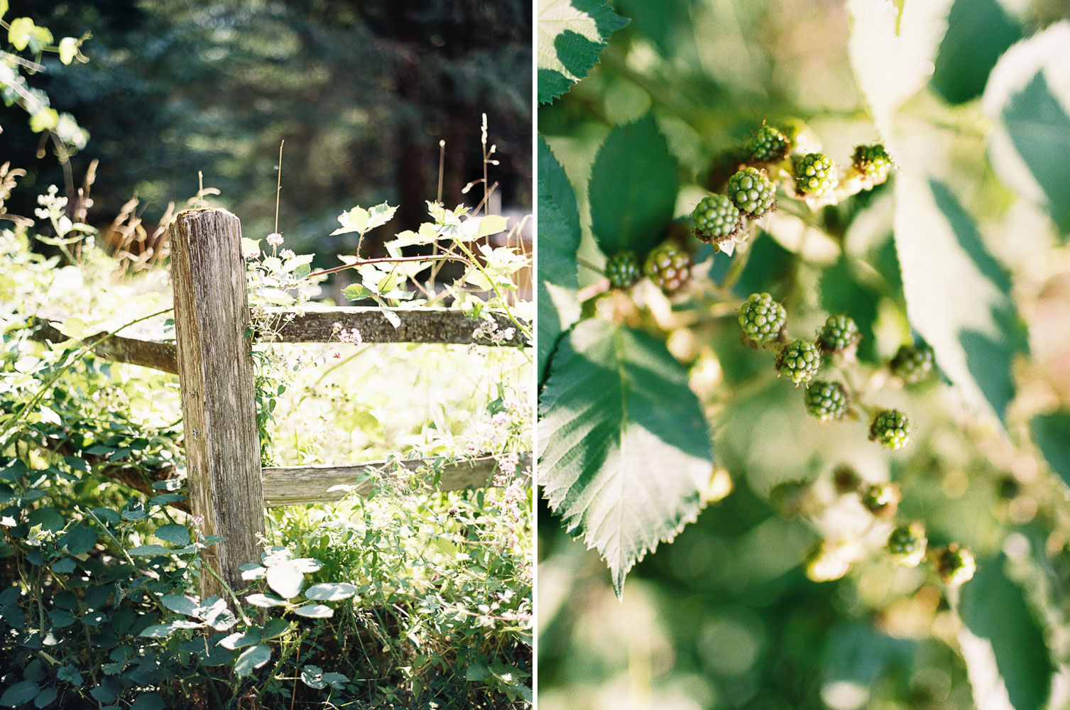 Details for Wellspring Spa Wedding at Mt. Rainier with Seattle Wedding Photographer Anna Peters