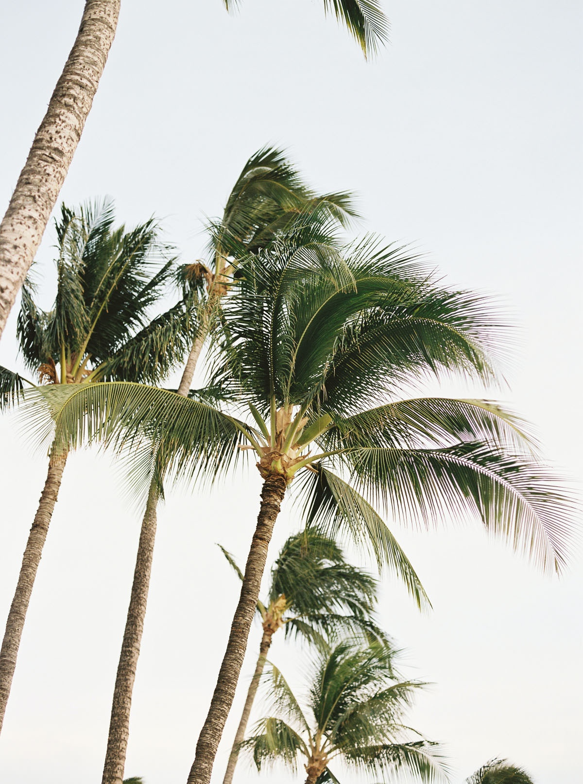a tiny travel guide to Maui by Destination Wedding Photographer Anna Peters
