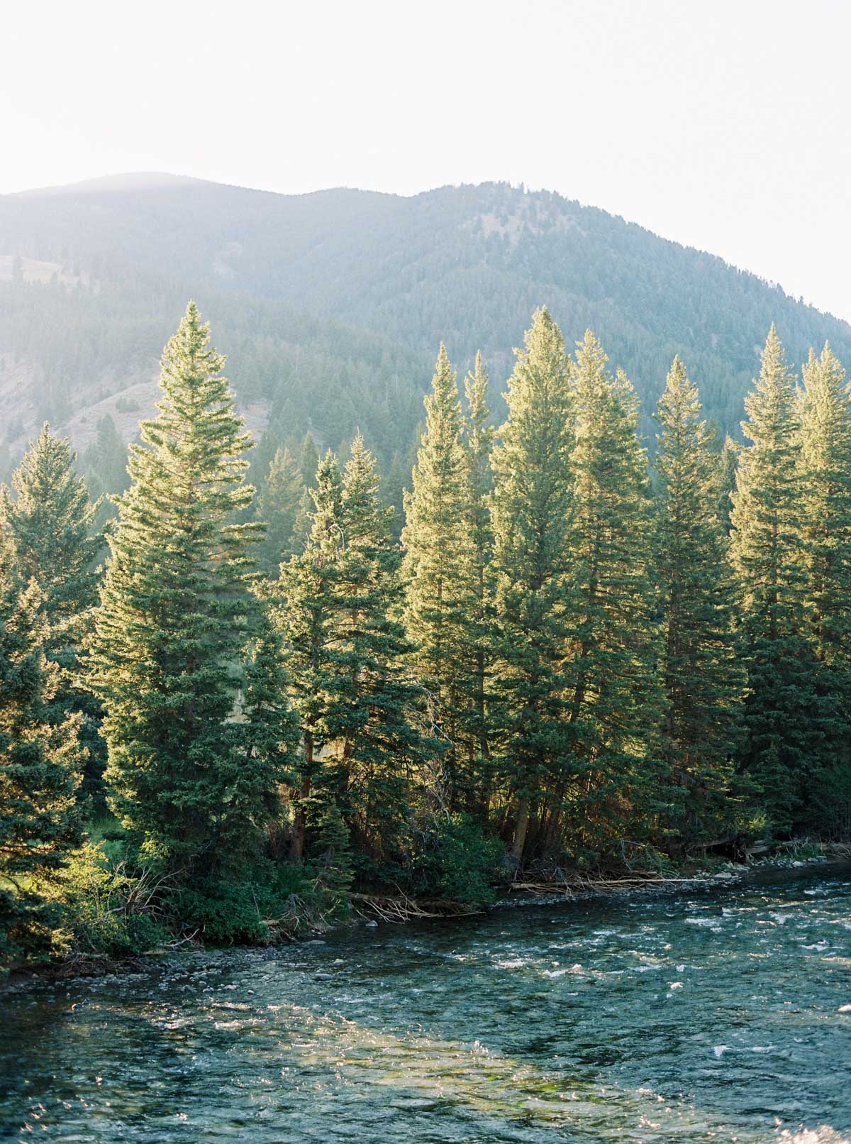 Backlit trees line a riverbank in Big Sky, Montana