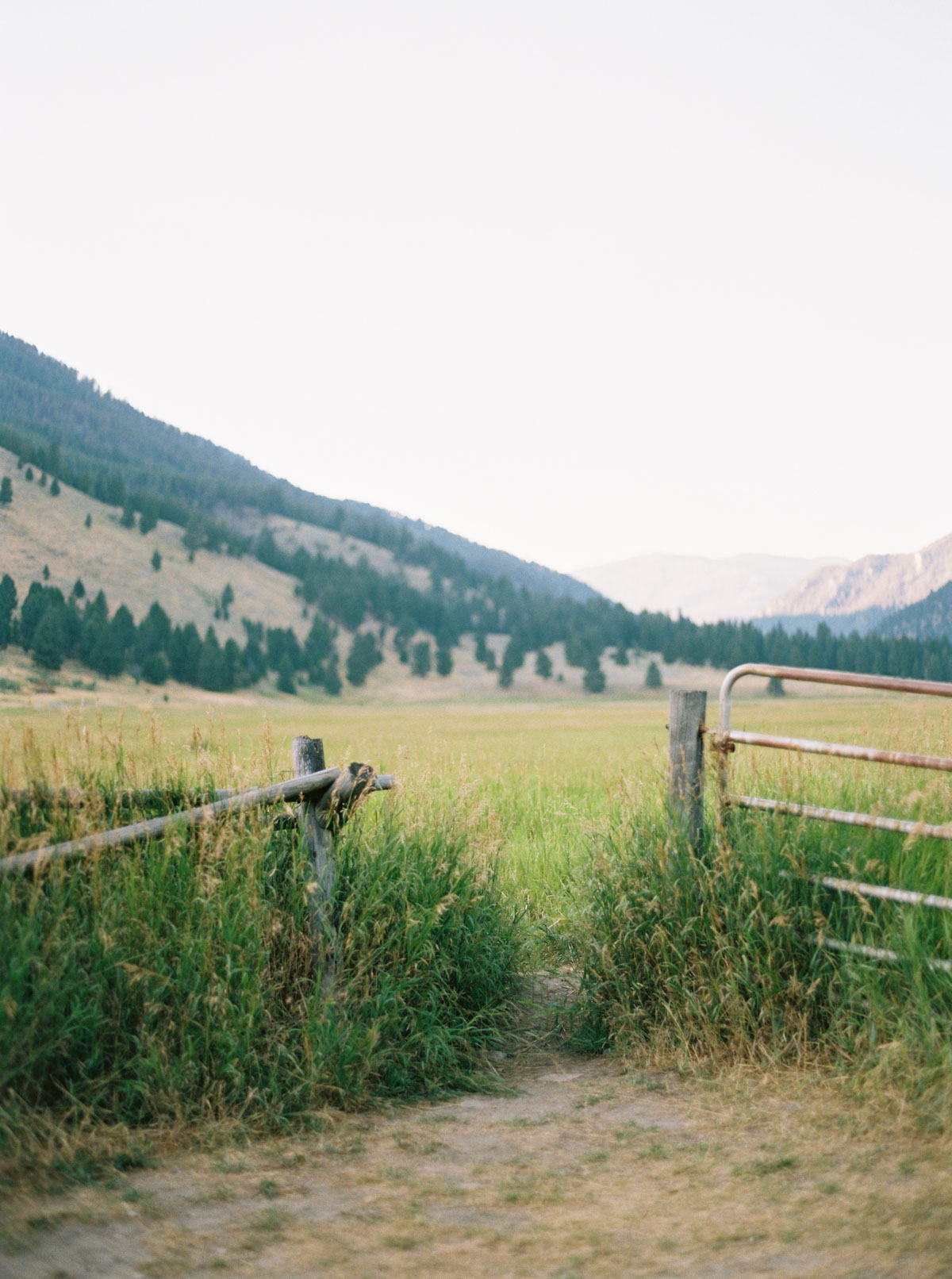 Gate opens into a golden field in Big Sky, Montana