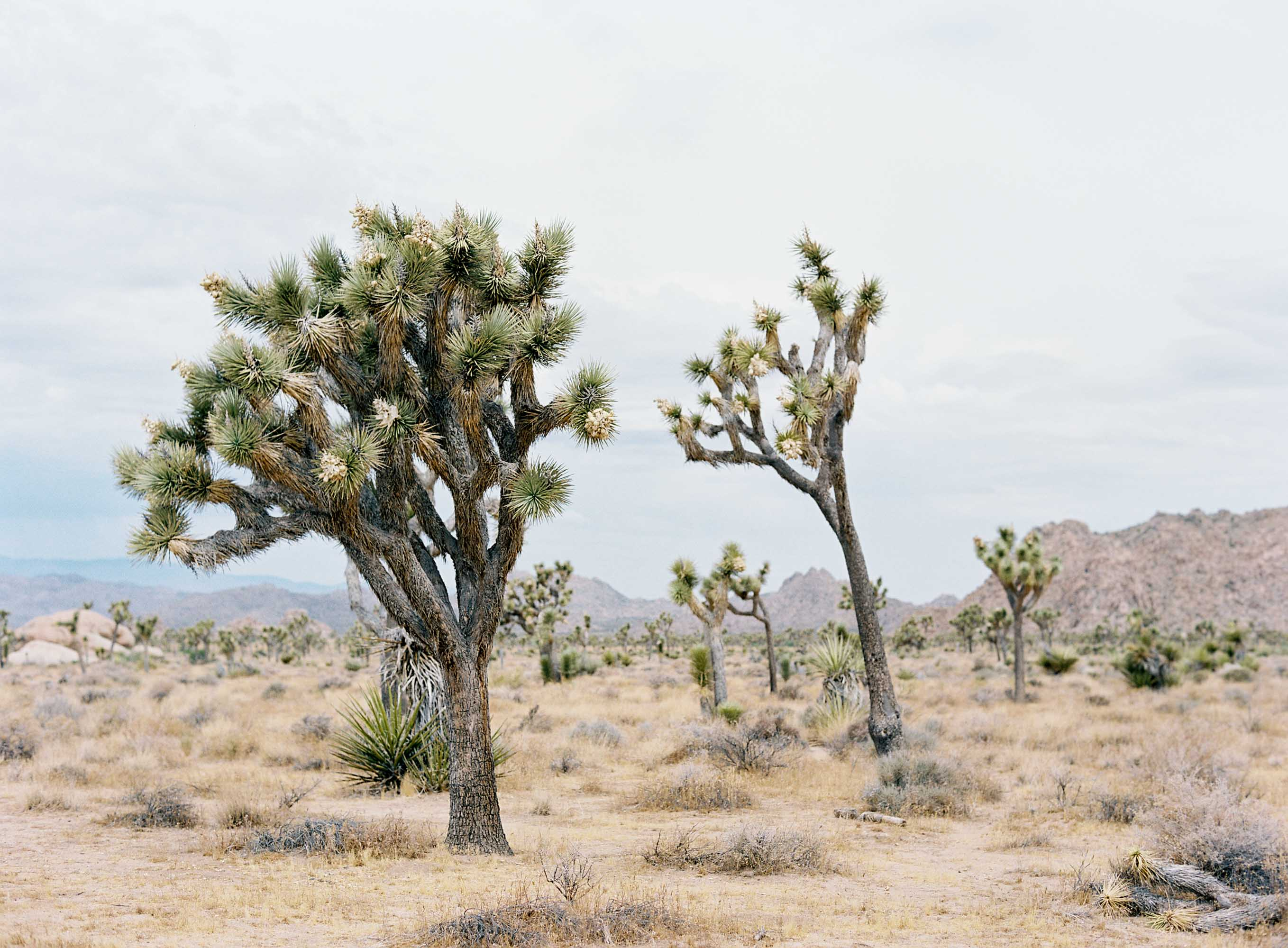 Travels in Joshua Tree   Seattle, California, and Destination Wedding Photographer Anna Peters