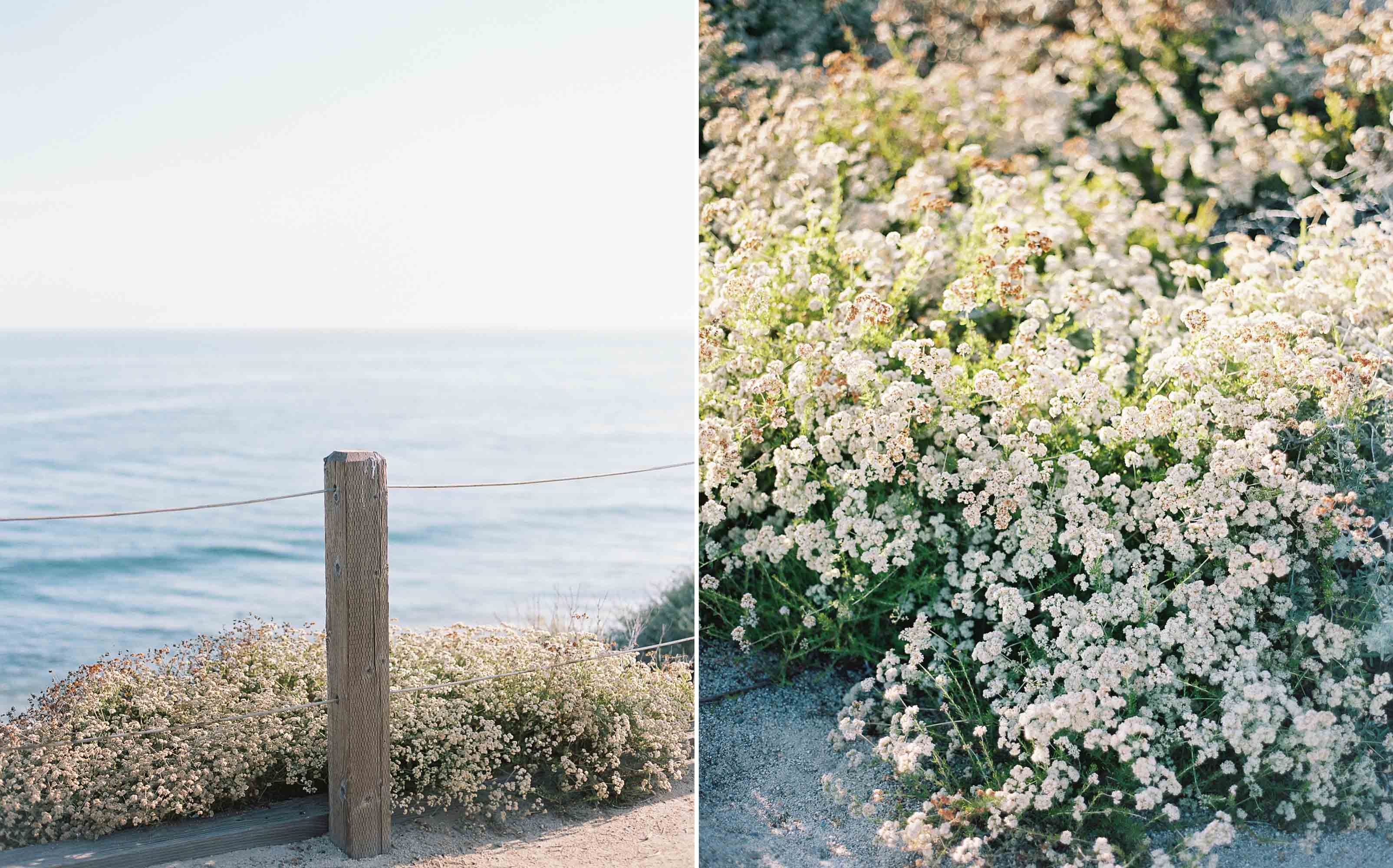 Travels in Newport Beach   Seattle, California, and Destination Wedding Photographer Anna Peters